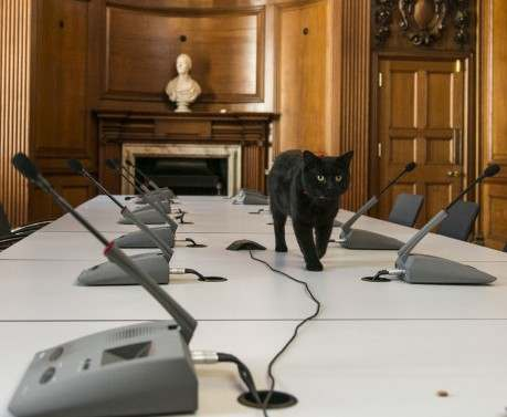 Еще одно британское министерство приняло на работу кота