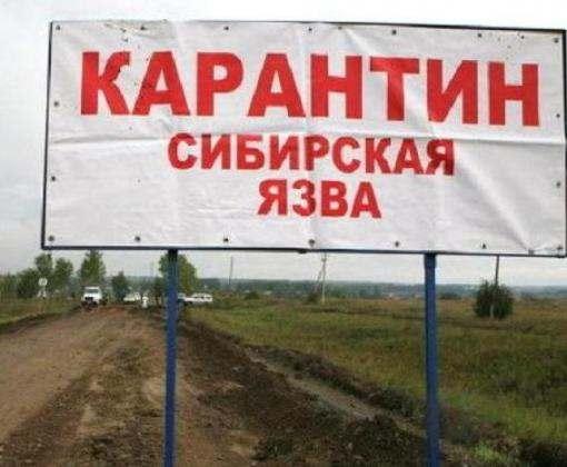 На севере России более 70 человек заболели сибирской язвой