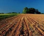 У харьковских аграриев отсудили 180 гектаров земли