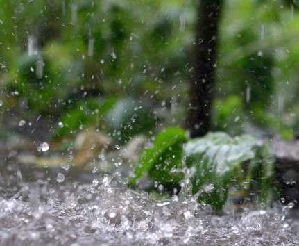 Погода в Харькове: ночью кратковременный дождь