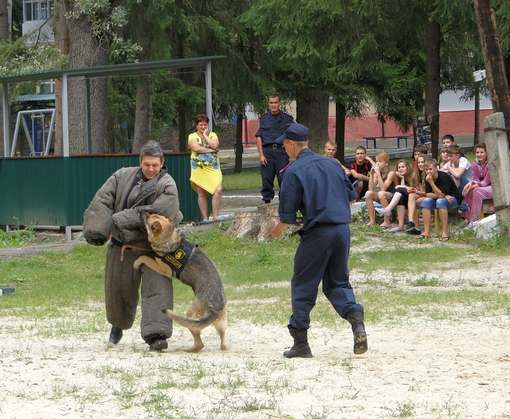 Полицейская овчарка Даша любит мечтать под яблоней