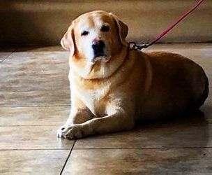 Определена порода чаще всего кусающих людей собак