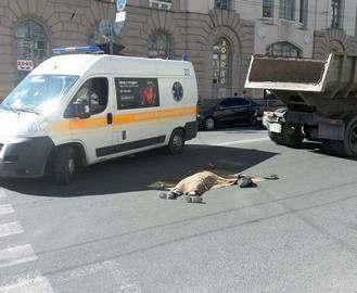 В центре харькова КрАЗ переехал мужчину: фото-факт