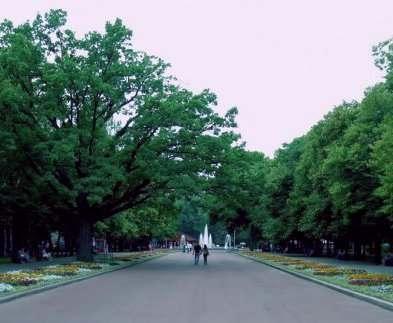 В Харькове создан экореестр деревьев сада Шевченко