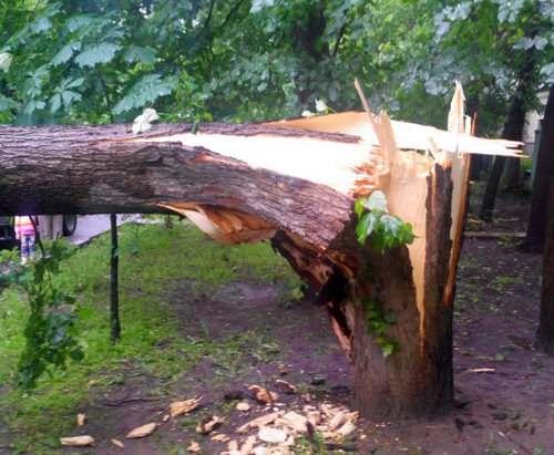Буря в Харьковской области: последствия