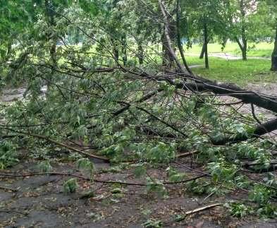 Стихия в Харькове: упало 12 деревьев