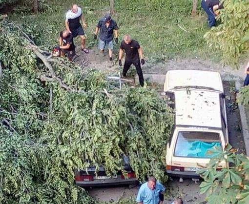 В Харькове на автомобиль упало дерево