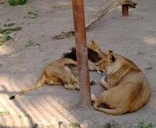 Харьковский зоопарк закрыли для экскурсий