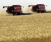 Под Харьковом прокуратуре мешали собирать арестованный урожай