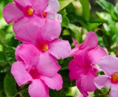 В саду Шевченко пройдет выставка цветов