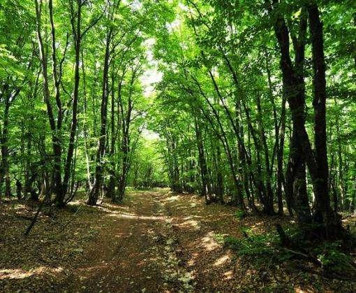 Под Харьковом в лесу заблудились две девочки