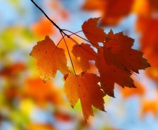 К 1 сентября в Харьков пожалует осень?