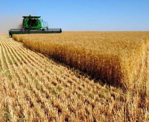 Харьковская область попала в тройку самых урожайных