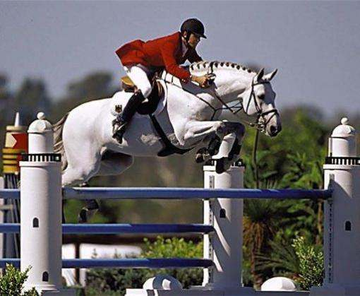 В Харькове планируют установить «конный» национальный рекорд