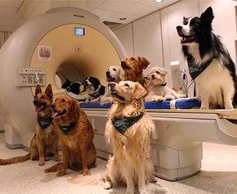 Доказана способность собак понимать человека