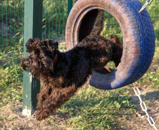 В Харькове открыли очередную площадку для выгула собак