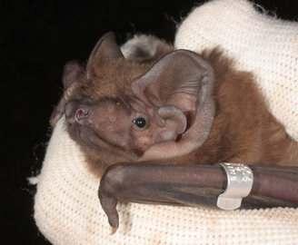 Под Харьковом обнаружили гигантских летучих мышей