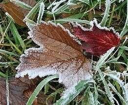 Погода в Украине: заморозки на всей территории