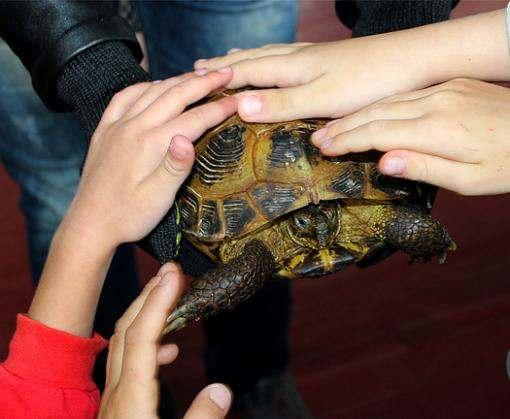 Животные по вызову: новая услуга харьковского зоопарка