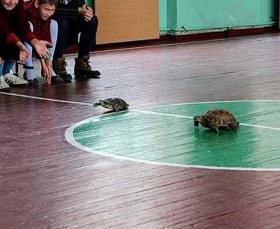Черепахи из харьковского зоопарка устроили бега