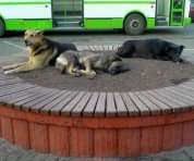 Под Харьковом начали стерилизовать бездомных собак