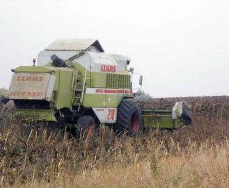 Под Харьковом нашли бесхозные поля подсолнечника