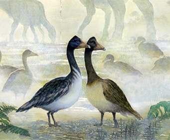 Опровергнут один из главных мифов о динозаврах