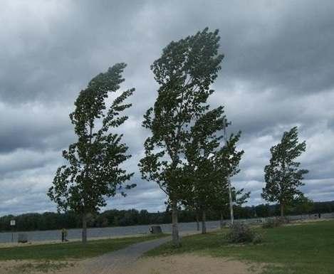 В Харькове снова смогут падать деревья