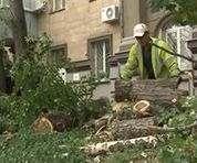 В субботу в Харькове будут опять пилить деревья