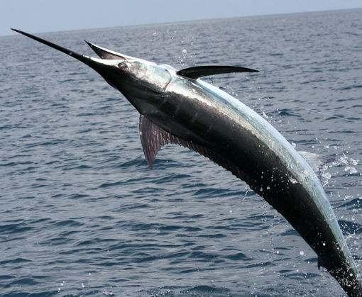 Ценная рыба оказалась под угрозой исчезновения