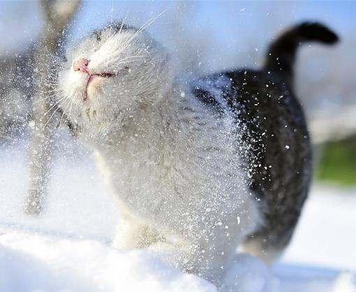 Завтра в Харькове ожидается снег