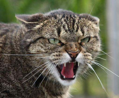 В Новобаварском районе Харькова введен карантин из-за бешенства кота