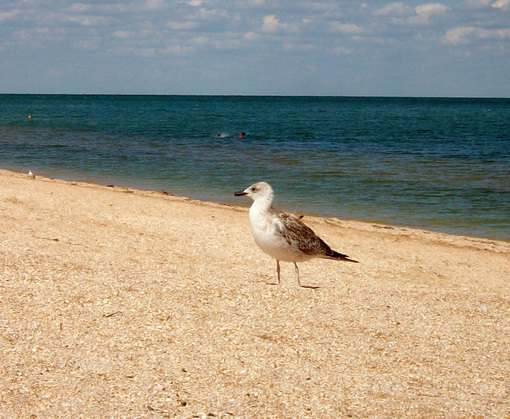 Концентрация соли в Азовском море приближается к черноморской