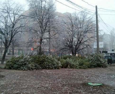 В Харьковской области началась акция «Новогодняя елка»