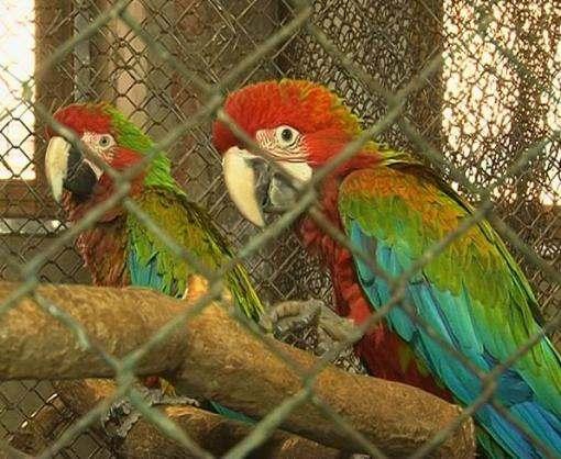 В харьковском зоопарке появилось пополнение, которое ждали 11 лет