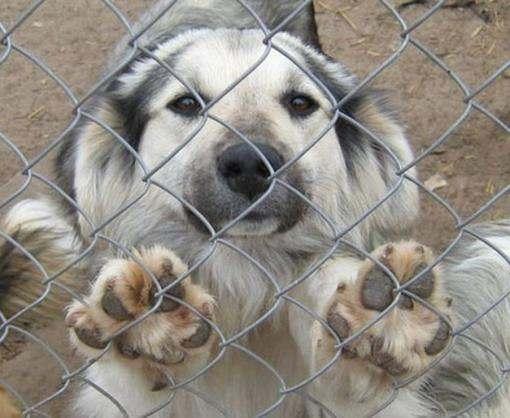 Харьковский приют для животных просит помощи у горожан