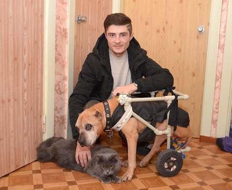 Харьковчанин смастерил коляску для любимой собаки