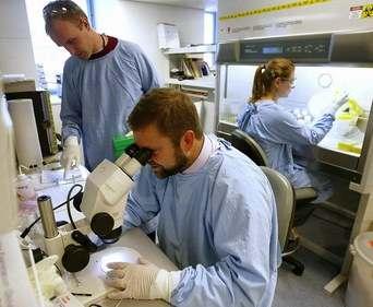 Названа главная опасность лечения стволовыми клетками