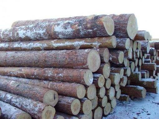 Харьковские правоохранители нашли 200 кубов нелегальной древесины