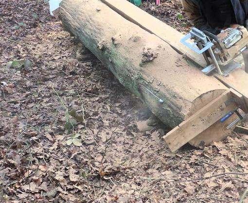 Под Харьковом браконьеры пытались вывезти столетние дубы