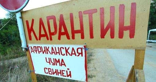 Под Харьковом объявилась африканская чума свиней: подробности