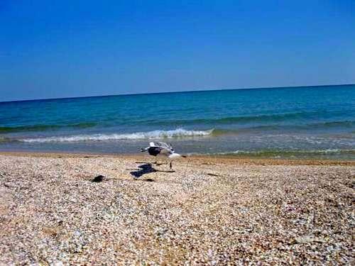 Азовское море теряет рыбу
