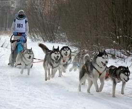 В Харькове пройдет традиционный Winter Fest