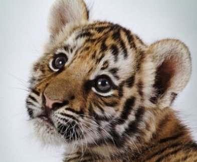 Харьковский зоопарк участвует в программе по сохранению редких видов животных