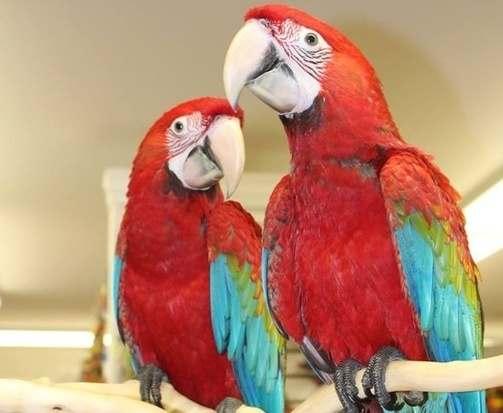 В харьковском зоопарке выбрали имена для птенцов попугаев
