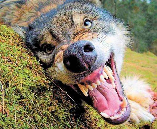 Под Харьковом бродячие собаки напали на школьника