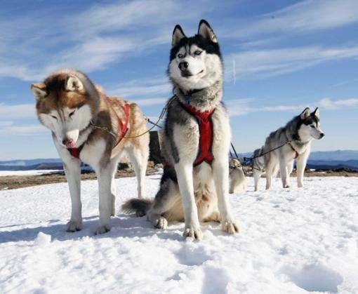 В Харькове посетители Winter Fest смогут сфотографироваться с индейцами и покататься на собачьих упряжках