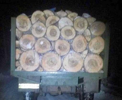 Под Харьковом поймали машины с древесиной