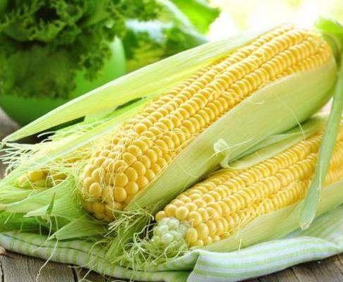 Эксперты предупредили об угрозе исчезновения кукурузы