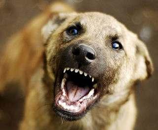 Укусила собака — бегите к врачу